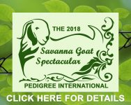 Savanna Goat Spectacular